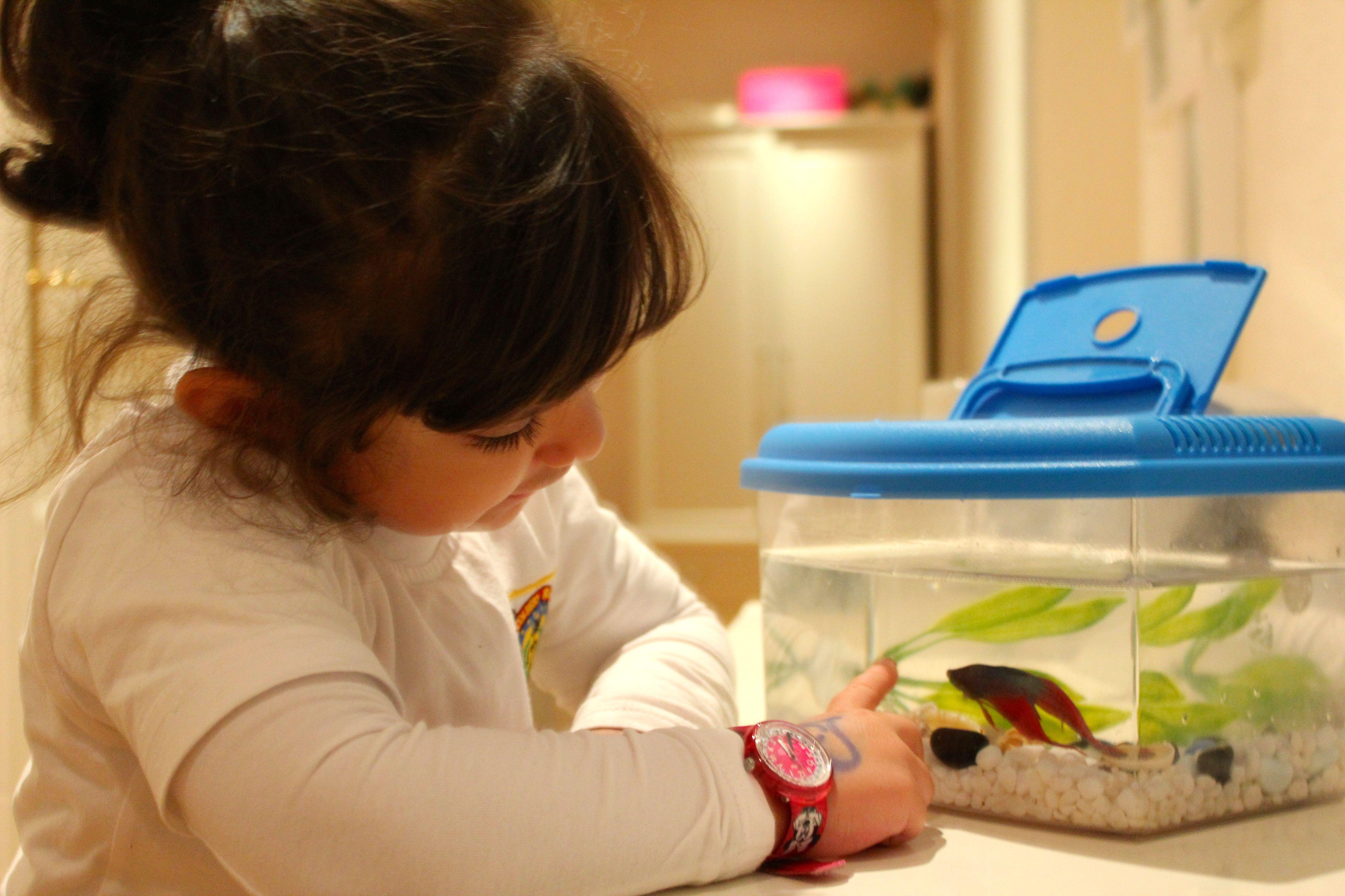 Tenemos visita en casa llego pepito celina y sus baby for Cuidado de peces