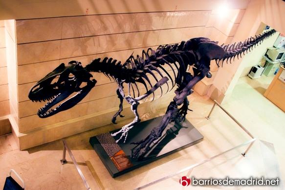 dinosaurio-tiranosuarius-rex-museo-ciencias-naturales-de-madrid